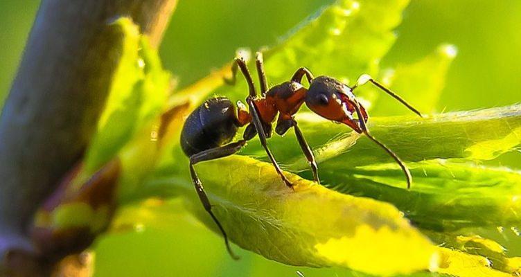 ¿Por qué las hormigas no tienen pulmones?