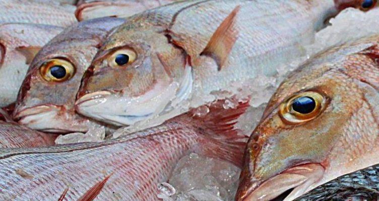 Cómo saber si el pescado es fresco paso a paso