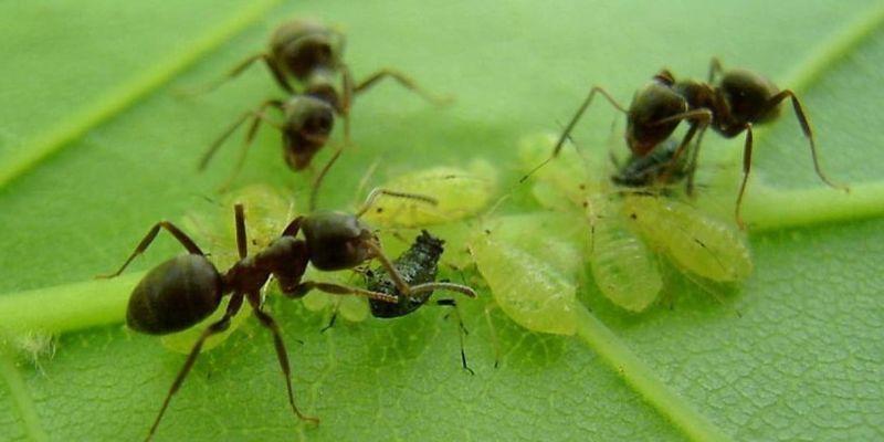 Qué significa soñar con plagas de insectos