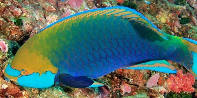 Cuáles son los peces más raros del mundo