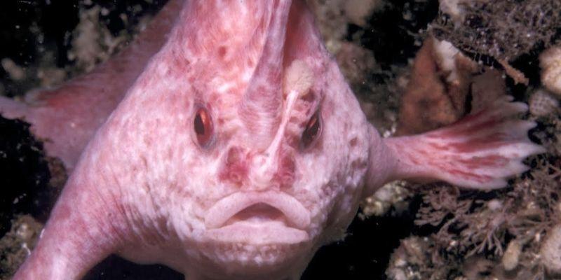 Los 5 peces más raros del mundo