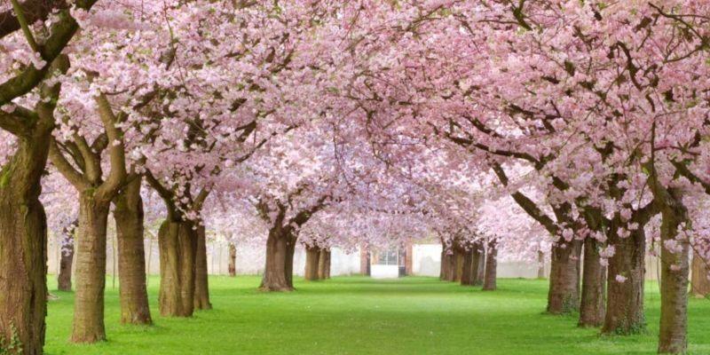 Origen del cambio de hora primaveral
