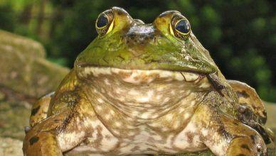 Las 5 especies invasoras en España que más preocupan en 2020