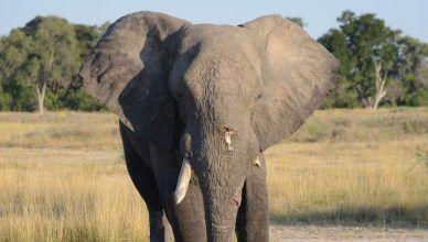 Mueren 150 elefantes en Botsuana por una enfermedad desconocida