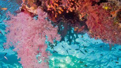 Por qué el Mar Rojo es rojo