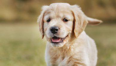 Se dispara un 25% el abandono de perros después del confinamiento