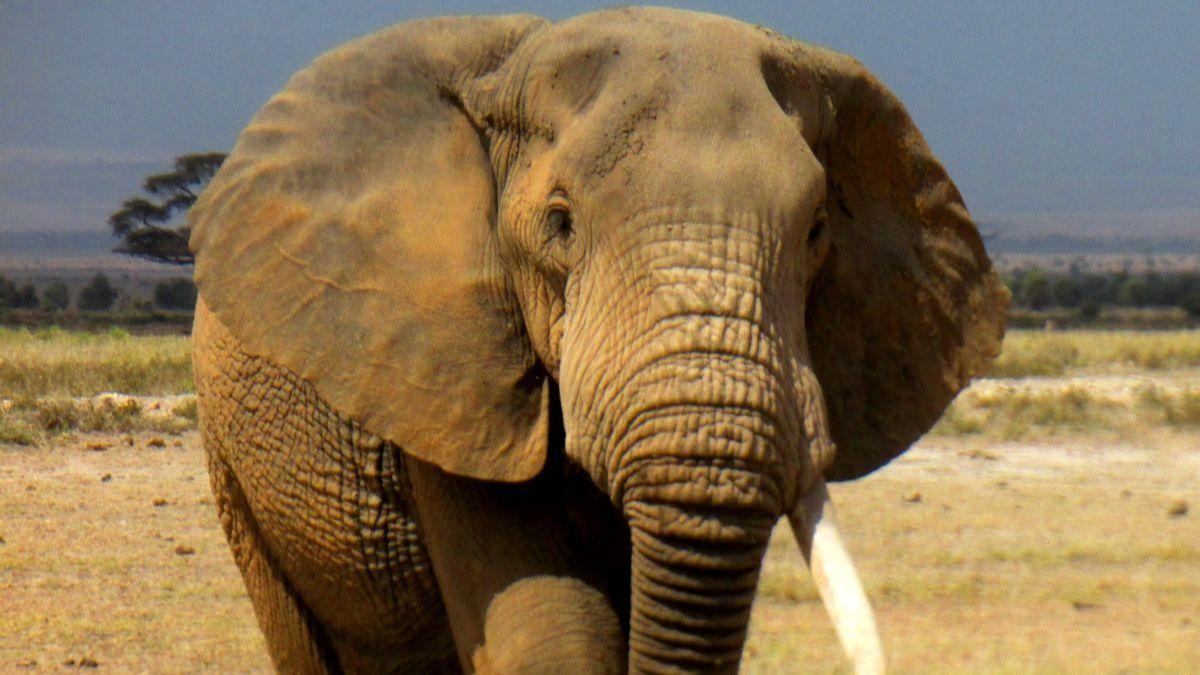Muere un empleado de Cabárceno tras ser golpeado por un elefante