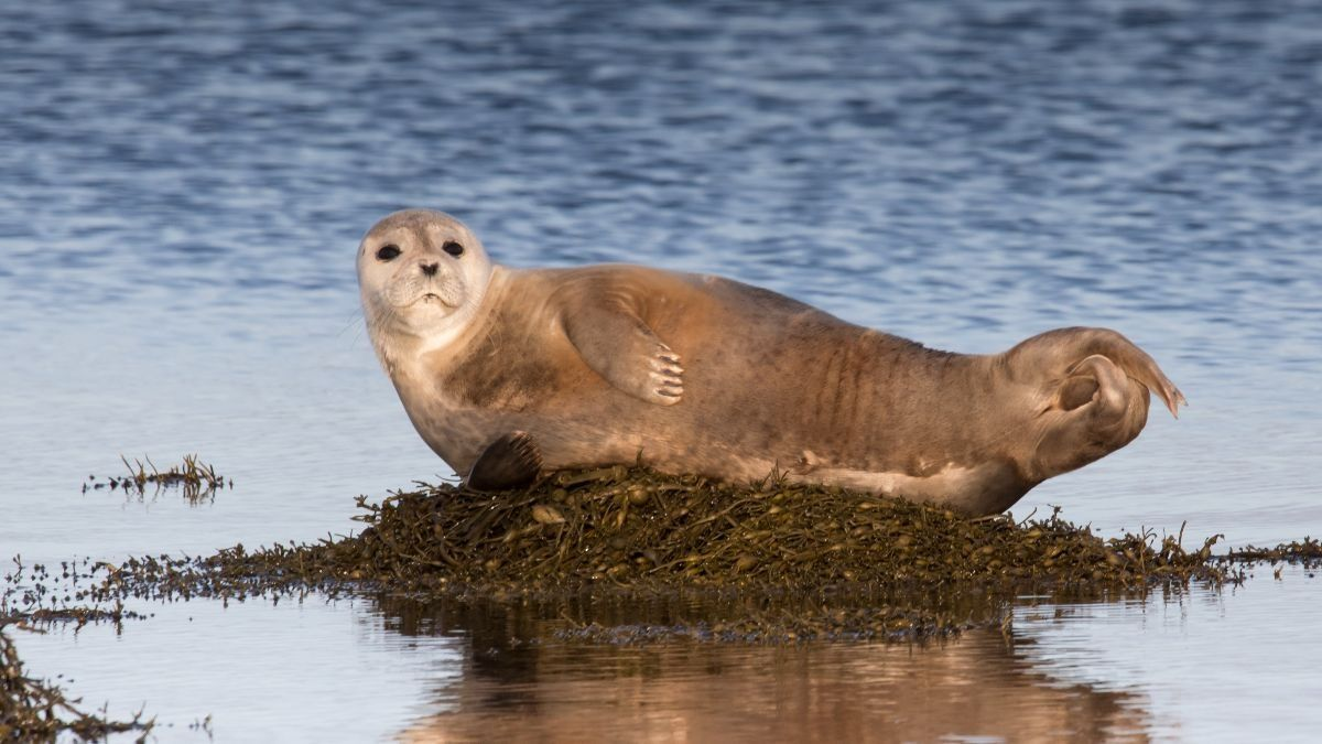 Los 5 tipos de focas más comunes del mundo