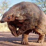 Los 5 animales más raros de África: ¿Conoces la musaraña elefante?