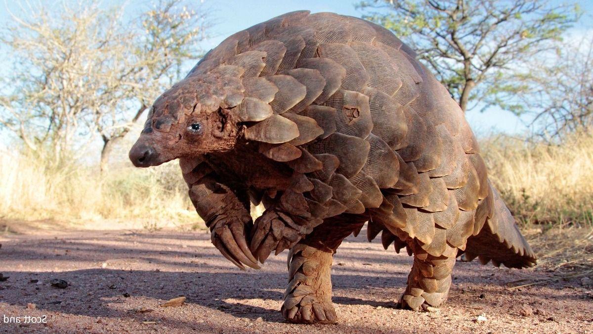 Los 5 animales más raros de África